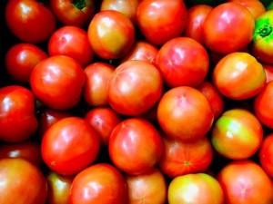 <10/26開催>愛媛県西予市ゆすかわのトマトまつり!