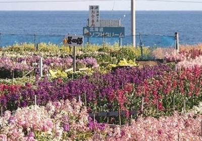 <11/24>南房総のちょい飲み!〜海と山と酪農と花のまち