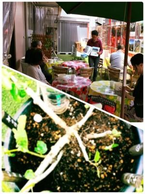 <5/19開催>いちばの昼勉〜いちじくカレー&いちじく植樹祭~