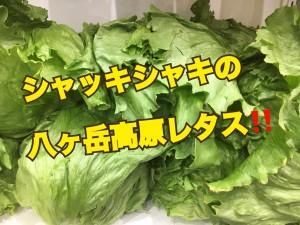 西伊豆・富士見まつり6