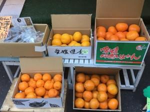 いしださん柑橘