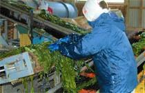 林商店さんの海産食品の加工はほとんどが手作業