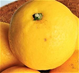 鮮やかな黄色の平戸夏香は見ているだけでもパワーをもらえます。