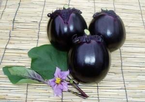 越の丸茄子は色つや、肉厚の食感と茄子自体が持つ甘みが特長。