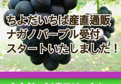 9月17日、18日限定!ご当地産直通販【長野県小布施町 ナガノパープル&種無し巨峰セット】  ※販売は終了いたしました