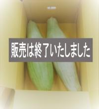 宿儺(すくな)カボチャ【毎週水曜日注文締め、毎週木曜日以降発送】