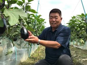 西条市名産「絹かわなす」を作っている真木さん。薄皮で大きな茄子は作るのが難しいのですが、毎シーズン細心の注意を払いながら、愛情込めて育てています。