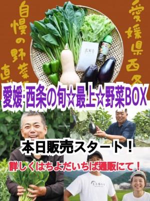 ご当地産直通販 絶品野菜が勢ぞろい!【愛媛県西条市野菜名人たちの旬野菜BOX】 ※販売は終了いたしました