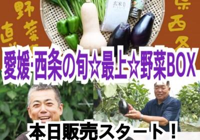 本日スタート!ご当地産直通販 絶品野菜が勢ぞろい!【愛媛県西条市野菜名人たちの旬野菜BOX】
