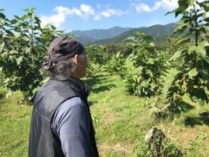 農薬不使用、有機栽培の愚禿山農園さん。いちじく他、果樹の栽培、味には定評があります。