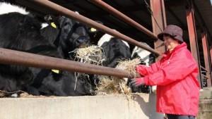 【太平牧場】 約300頭の牛を肥育しています。また、ぶどうや梅の栽培、無添加・無着色のこだわったベーコンの加工販売などを行っています。民宿運営などにも取り組んでいます。