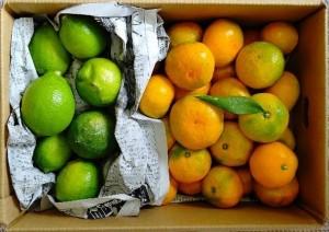 愛媛県松山市もぎたてみかん&初物レモン詰め合わせセットの生産者さんのご紹介