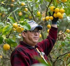 島の北西部地域にあるレモン畑を管理・運営も行っております。年間を通して農薬や抗生物質などの補助栄養剤を一切使用・散布していない「完全無農薬」のレモンです。
