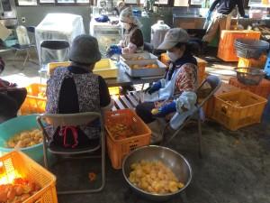 【屋久島物産開発】屋久島の農林水産物を広く全国、世界に発信し販売することで、農家さん、漁師さんの所得向上・安定を計ることを目的としており、多くの町民が一丸となって生産に取り組んでいます。