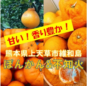 【ご当地産直通販】熊本県上天草市維和島 旬の柑橘〜ぽんかん&不知火〜 ※販売は終了いたしました