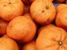 甘くて香り豊か!上天草市維和島産 有機栽培の訳ありポンカン 7kg【送料込】