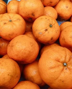 甘くて香り豊か!上天草市維和島産 有機栽培の訳ありポンカン 10kg【送料込】