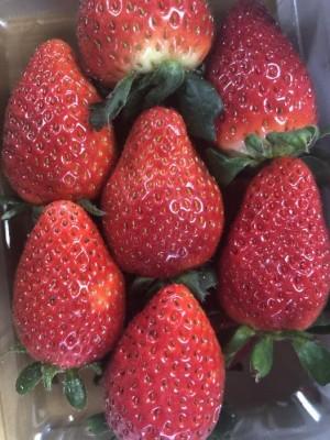 ハーブを育てる環境と同じ環境で育ったイチゴ達は、赤い色も濃くて、おいしさ倍増です!
