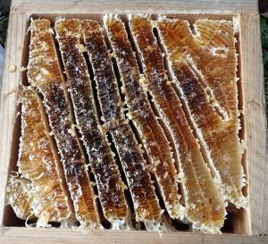 1年に一度しか採取できないニホンミツバチの蜂蜜は、巣房からゆっくりと自然に絞ります。