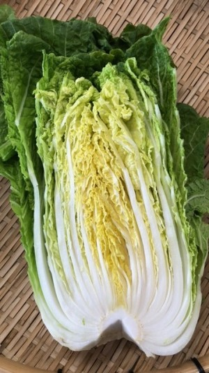 【白菜】平戸の豊かな土壌で育まれた白菜は、大ぶりで甘味があり、鍋物はもちろん、漬物としても美味しくいただけます。
