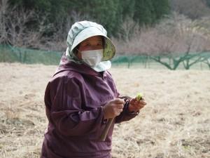 自然あふれるこの地域(塙町)で、季節のものを皆さんにお届けしたいと話される滑川さん、旬の味覚「ふきのとう」をご賞味下さい。