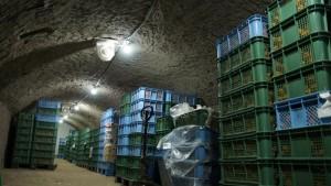 岸田果樹園のこだわり! 温度と湿度が安定している廃トンネルで長期保存熟成をおこなっています。