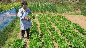 【ねぎ】平戸の肥沃な土壌を活かし様々な農産品を育てています。写真は平松須美子さん
