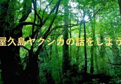 <4/21開催>あなたのまちの話をしよう~ちよだいちばのご当地夜話 第二弾は「屋久島ヤクシカのはなしをしよう」※終了しました