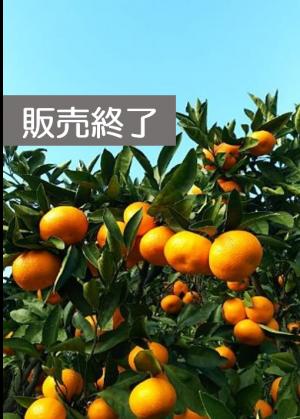 島の「せとか」と シトラスバスケットBOX (柑橘盛り合わせ)