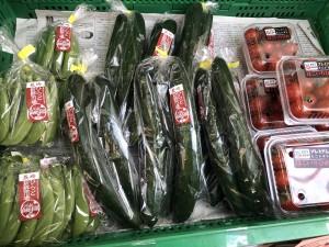 平戸野菜202105